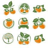柿子标签和元素集 向量 免版税库存图片