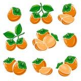 柿子集合 向量 图库摄影