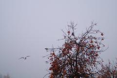 柿树和海鸥反对黑暗的天空 免版税库存图片