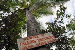 标志在棕榈树下-当心落的椰子 库存图片