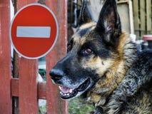 标志的背景的德国牧羊犬没有词条 免版税图库摄影