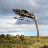 标志结构树 库存照片
