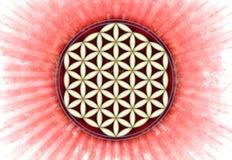 活标志-神圣的几何花  库存照片