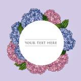 标签花卉设计模板 传染媒介手拉的例证概述桃红色和蓝色八仙花属在圆的框架在白色背景 库存例证