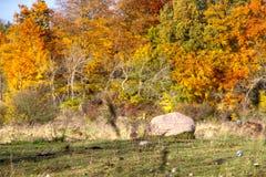 标记在秋天风景的石头 免版税库存图片