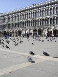 标记方形st威尼斯 免版税库存图片