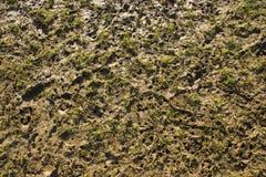 标记泥泞的间距螺柱 库存照片