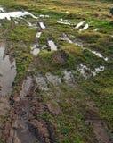 标记浸湿的草皮轮子 库存照片