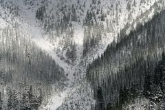 标记雪地点结构树x 库存照片