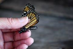 标记黑脉金斑蝶 免版税库存照片