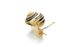 标题屏幕蜗牛往 库存图片