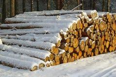 栈木头在冬天 免版税库存图片