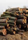 栈木料结构树木头 库存照片