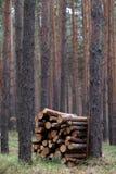 栈木柴在森林里 免版税库存图片