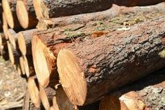 栈被剪切的结构树在森林里 免版税库存图片