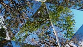 树、云彩&天空柜台顺时针万花筒  股票录像