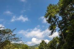 树、天空、绿色叶子和云彩 免版税图库摄影