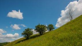 树、小山和云彩 一些反弹严格晴朗那里不是的蓝色云彩日由于域重点充分的绿色横向小的移动工厂显示天空是麦子白色风 库存照片