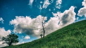 树、小山和云彩 一些反弹严格晴朗那里不是的蓝色云彩日由于域重点充分的绿色横向小的移动工厂显示天空是麦子白色风 免版税库存照片