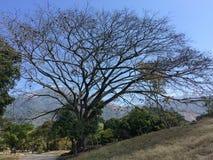树、山和天空 免版税库存照片