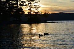树、山和鸭子剪影在湖 免版税库存照片