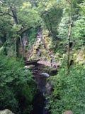 树、岩石、路和水 免版税库存图片