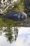 树、岩石和他们的反射在小河 免版税库存照片