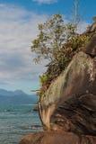 树、岩石和beacg 免版税库存图片