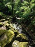 树、岩石&路 库存图片