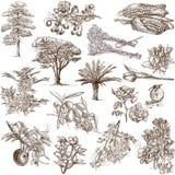 树、植物和花 免版税库存照片