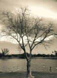 树、湖和小女孩 免版税库存图片