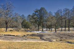 树、雪和岩石 免版税库存照片