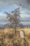 树、领域和篱芭 免版税图库摄影