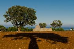 树、阴影和trulli (普利亚,意大利) 免版税库存照片