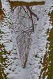 树三角和frosen树枝 冬天树场面 免版税库存照片