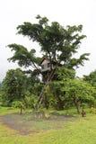 树上小屋在密林在瓦努阿图 图库摄影
