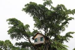 树上小屋,瓦努阿图 免版税库存照片