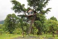 树上小屋,瓦努阿图 免版税库存图片