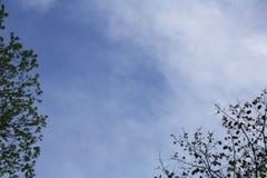 树上的天空 库存图片