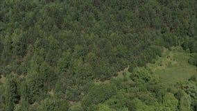 树上面从quadcopter的 森林干草原在俄罗斯 在天空的剧烈的云彩在干草原和阿尔卑斯 ?? 股票视频