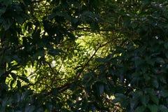 树上面和天空 免版税库存照片