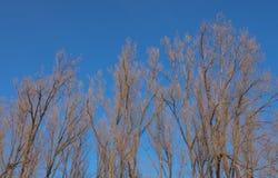 树上面在冬天 免版税图库摄影