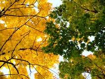 树上面在秋天在天空背景 免版税库存图片
