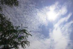 树上面在蓝天的与散开多云与太阳亮光 库存照片