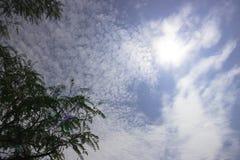 树上面在蓝天的与散开多云与太阳亮光 免版税库存图片