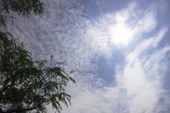 树上面在蓝天的与散开多云与太阳亮光 库存图片