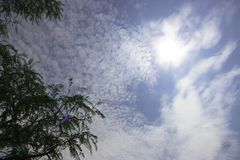 树上面在蓝天的与散开多云与太阳亮光 免版税库存照片