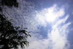 树上面在蓝天的与散开多云与太阳亮光 图库摄影