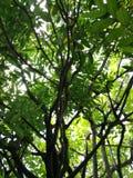 树上面,看法的底部 免版税图库摄影