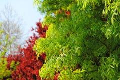 树上面 免版税库存图片